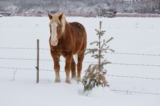 Free A Horse Beside A Fence Stock Images - 35189294