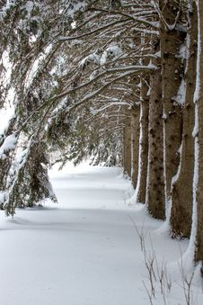 Free A Row Of Trees With Arched Branches Stock Photography - 35189652