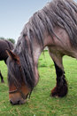 Free Horse Royalty Free Stock Images - 3522939