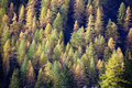 Free Fall Forest Stock Image - 3525291