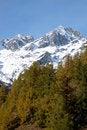 Free Mountain Tree Fall Stock Photography - 3525302