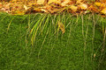 Free Moss And Leaves Stock Images - 3526554