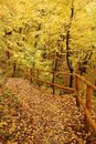 Free Autumn Forest Path Stock Photography - 3528162