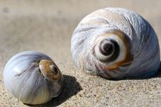 Free Seashells Up Close Stock Image - 3520401