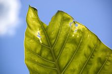 Real Leaf Stock Photography