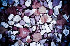 Free Autumn Leaves And Pebbles Stock Photos - 3521353