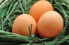 Free Nest With Eggs Stock Photography - 3522302