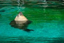 Free Sea Lion Taking A Sunbath Royalty Free Stock Photo - 3522325