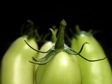 Free Green Tomatoes Closeup On Blac Royalty Free Stock Photography - 3522747