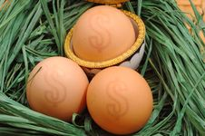 Free Nest With Eggs Stock Image - 3523211