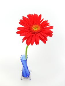 Free Flower In Blue Vase Royalty Free Stock Image - 3523336