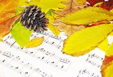 Free Autumn Melody Royalty Free Stock Photos - 3523478