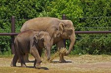 Free Mother And Baby Elephant Royalty Free Stock Image - 3527896