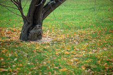 Free Fallen Leaves In Autumn Royalty Free Stock Photography - 3528107