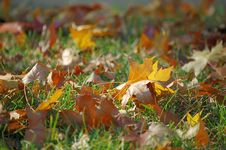 Free Fallen Leaves In Autumn Stock Photography - 3528192