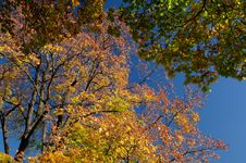 Free Autumn Foliage Stock Photos - 3528493