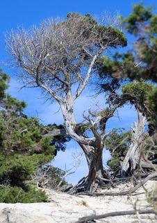 Free Ibiza Serie Stock Photo - 3528910