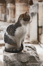 Free Cat In Ephesus Stock Photo - 35219810