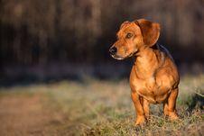 Free Dog Stock Photography - 35213202