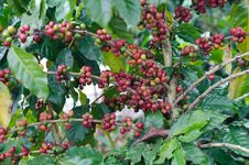 Free Coffee Beans Stock Image - 35218771