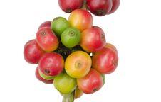 Free Coffee Beans Stock Photo - 35218790