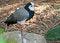 Free Tall Bird Stock Image - 35219811