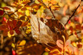 Free Autumn Leaves Royalty Free Stock Photography - 35231347