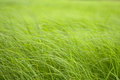 Free Summer Grass Stock Images - 35234714