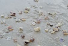 Free Wet Beach Sand With Seashells Royalty Free Stock Photos - 35230288