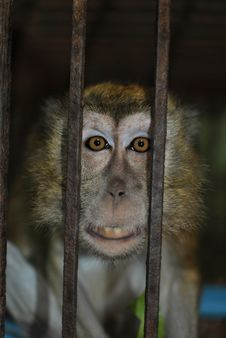 Free Monkey In A Cage Stock Images - 35230764