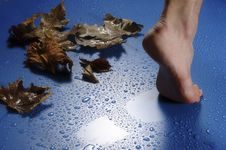 Free Foot And Leaves Royalty Free Stock Photos - 35233088