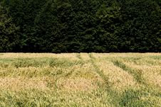 Field With A Crop Royalty Free Stock Photos