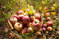 Free Fresh Red Apple Royalty Free Stock Photo - 35240015