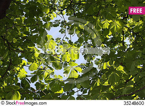 Free Green Leaves Stock Photo - 35248600