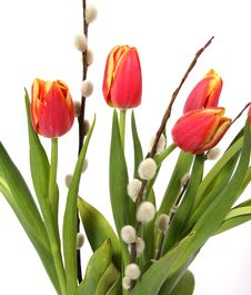 Free Tulips Stock Images - 35248774