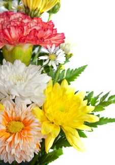 Free Chrysanthemum Flower Royalty Free Stock Image - 35251076