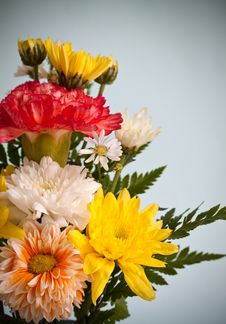 Free Chrysanthemum Flower Stock Photos - 35251093