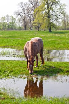 Free Horse Eating Grass Stock Photography - 35252202