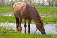Free Horse Eating Grass Stock Photos - 35252233