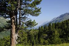 Free Tree In A Tourist Route High In The Mountains Royalty Free Stock Photo - 35253405