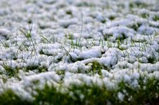 Free Grass Covered With Snow Royalty Free Stock Photos - 35254788
