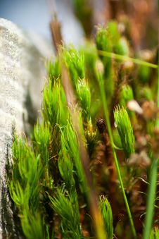 Free Detail Of Moss Royalty Free Stock Images - 35255099