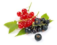 Free Red And Black Currant Royalty Free Stock Photos - 35255618