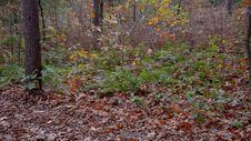 Free Autumn Walk Royalty Free Stock Images - 35256819