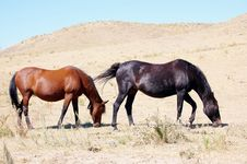 Free Blackfoot Indians Horses Royalty Free Stock Photography - 35259627
