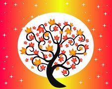 Free Autumn Tree Stock Photo - 35263240