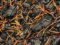 Free A Charred Wood Sprinkled With Spruce Pine Needles Stock Photo - 35279740