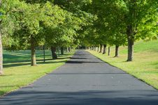 Free Driveway Lined By Trees Stock Photos - 35274553