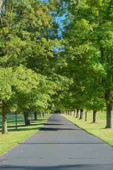 Driveway Lined By Trees Stock Photography