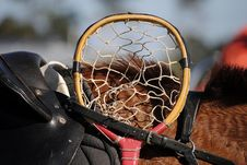 Free Cane Polocrosse Racquet Head Royalty Free Stock Image - 35275366